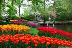 Сезон цветения в Кёкенхофе начнется в конце марта