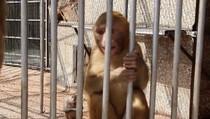 Поющая обезьяна., 01:02
