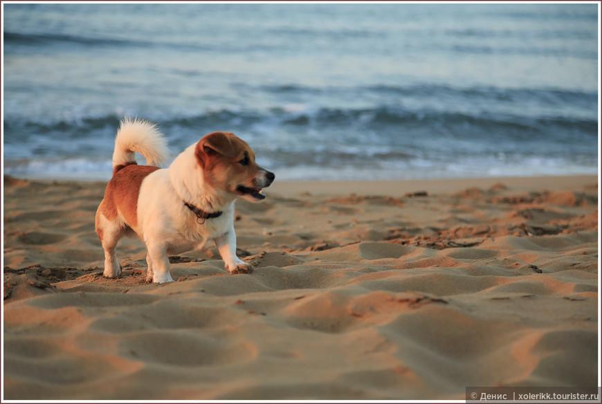 Соседи по пляжу. Таких дружелюбных собак я ещё не встречал. Наверное, это само место так положительно влияет и на людей, и на животных. Барбос не отставал от меня всю дорогу, через весь пляж. Час или полтора, не меньше. Как будто он Хатико, а я его хозяин на протяжении последних 10 лет )