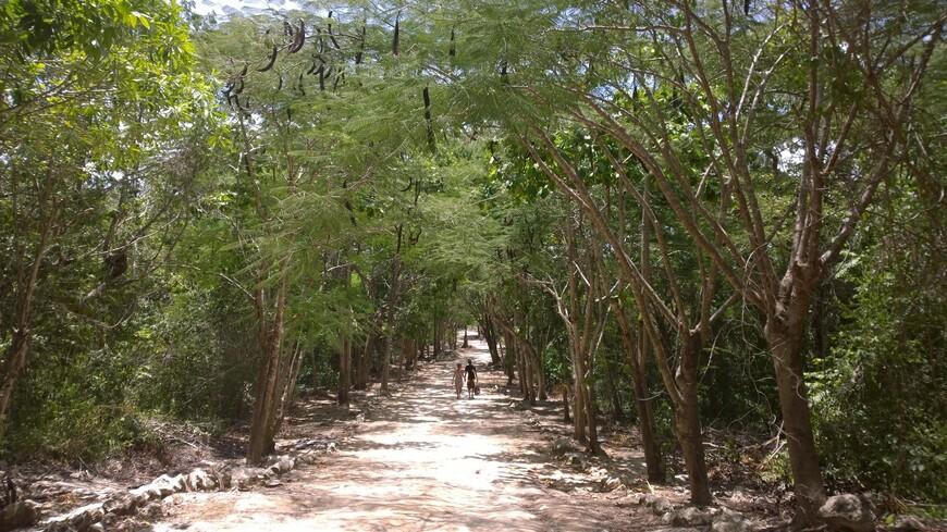 По дороге к сенотам