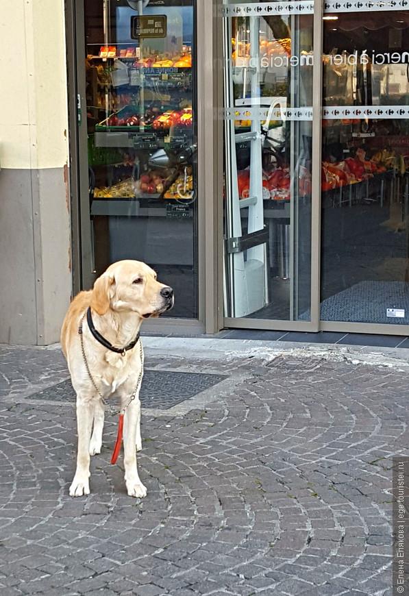Пес ждет хозяев из продуктового магазина