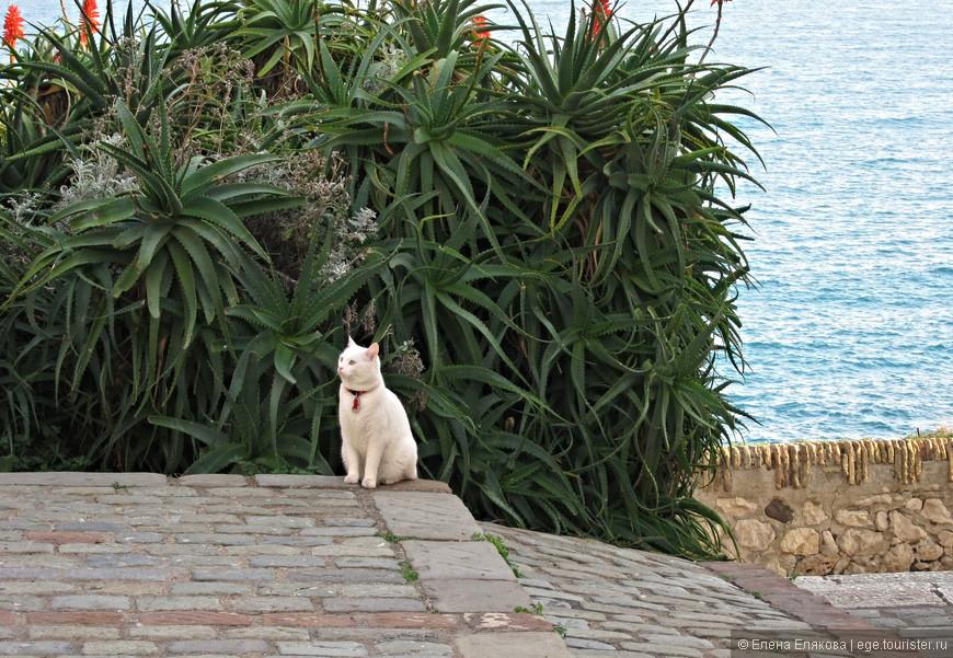 Котейко на набережной Promenade Amiral de Grasse (Променад-Амираль-де-Грасс)