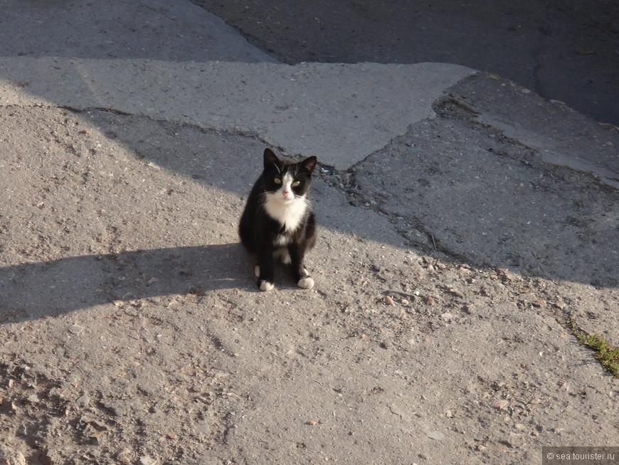 Вот такой очаровательный кот.