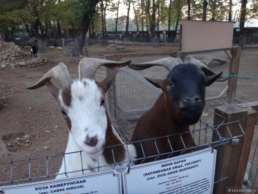 Животных здесь можно кормить, еду продают в киосках зоопарка.