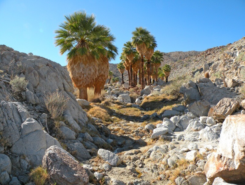 21-Palm Canyon.jpg