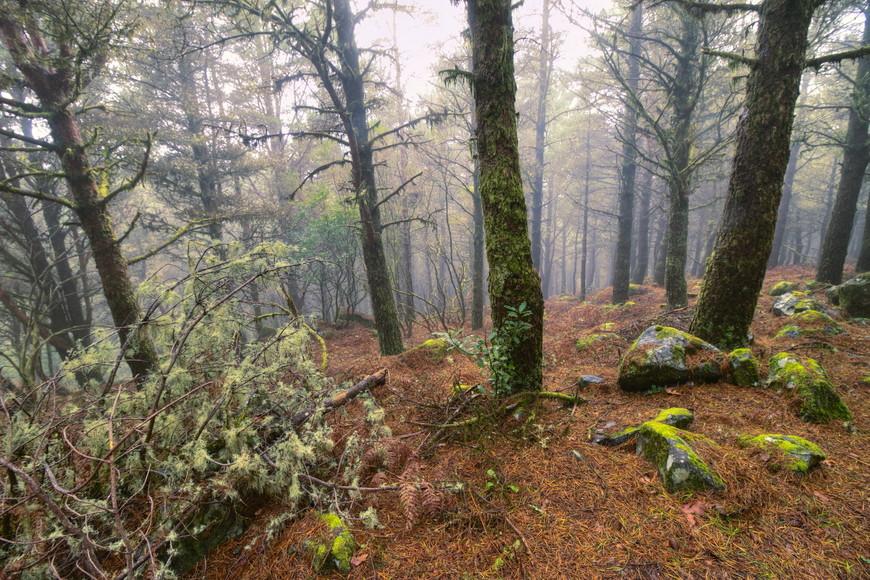 Леса Мадейры.
