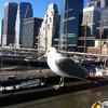 Вид на нижнюю часть Манхеттен. Пешеходная экскурсия по Нью-Йорку.