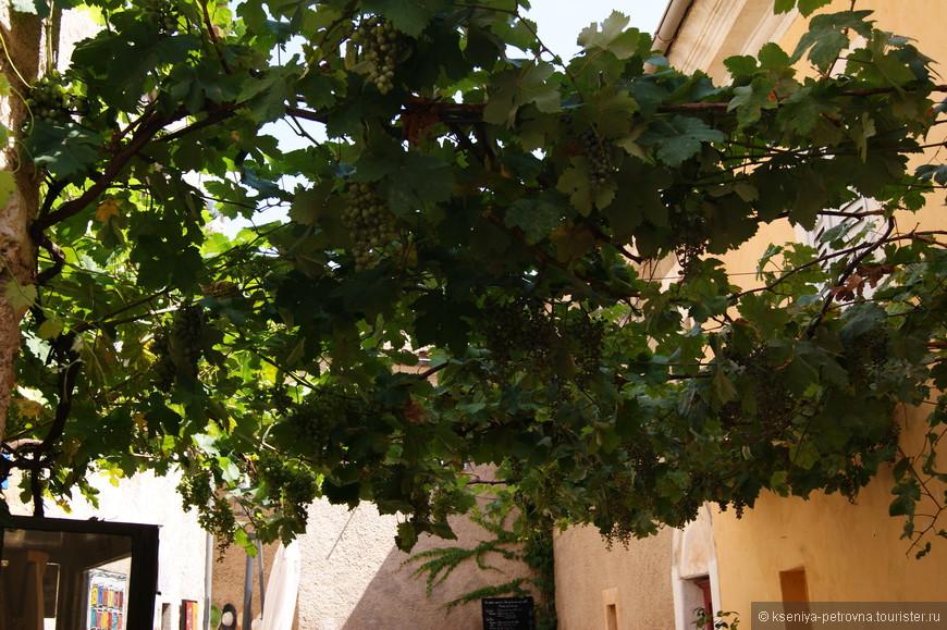 Виноградные гроздья над головой