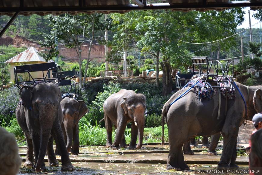 Кто хочет прокатиться на слоне, будь готов заплатить  1000 руб. за 5 минут удовольствия.
