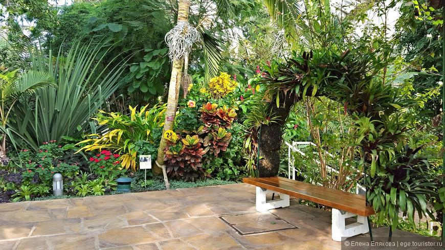 """Оранжерея """"Пирамида"""", кроме растений здесь обитают фламинго, рыбы, черепахи, насекомые в инсектариуме и др. Видимо, здесь находятся и """"Джунгли бабочек"""", которых мы, к сожалению, не видели - климат в оранжерее не располагает к длительному пребыванию в ней в верхней одежде."""