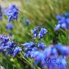 Цветущий Дурмитор весной