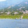 Розовый пеликан водится только на озере и больше негде в мире