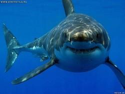 Океанариум Парижа и Airbnb разыгрывают ночь с акулами