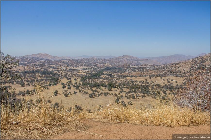 Уже замечаешь её из далека, так как на фоне пустых бескрайних холмов это зелёный кучерявый оазис.
