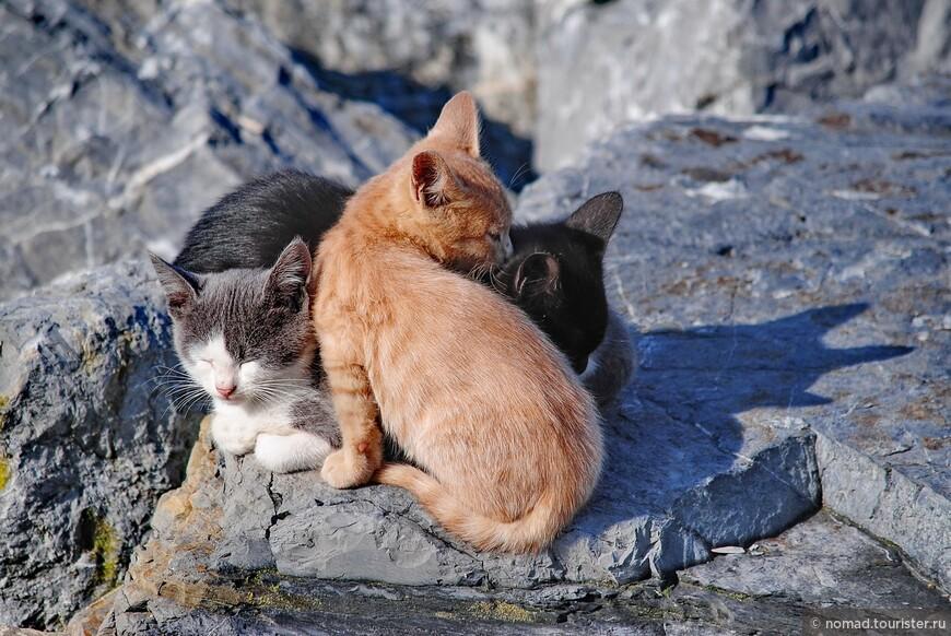 Кошики..))