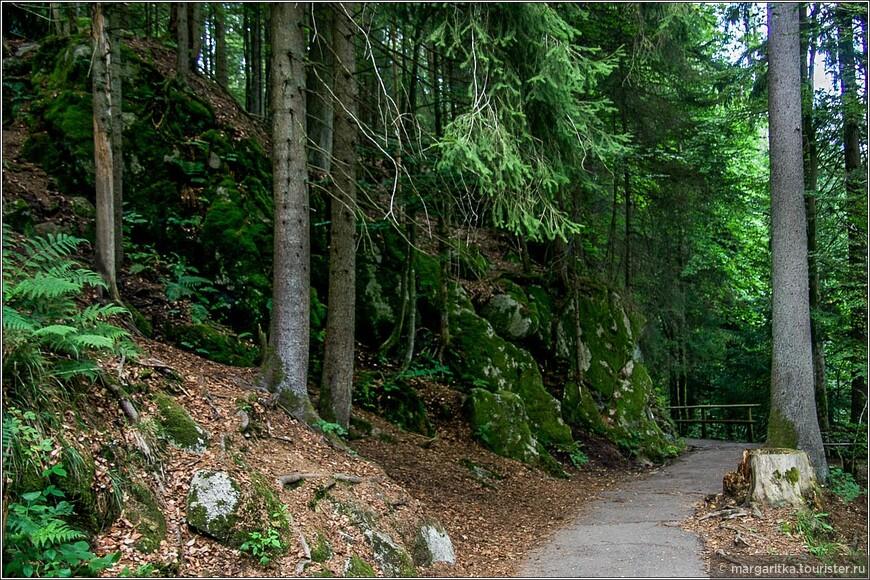 ущелье вокруг водопада плотно заросло густым лесом