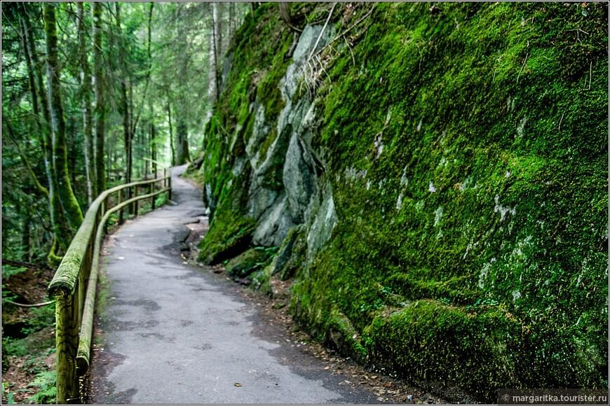 часто дорожка пролегает вдоль довольно высоких скал плотно поросших мхом