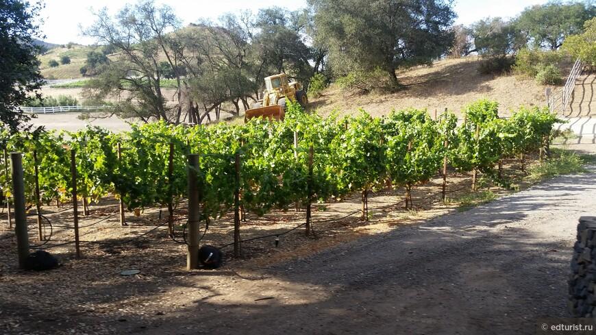 Виноградники на ранчо Саддлрок