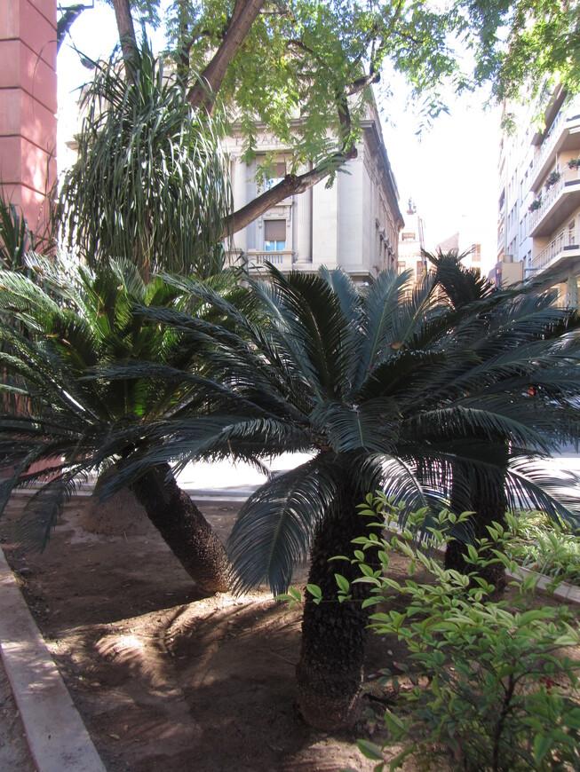 Карликовые пальмы