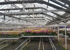 Орхидеи Санта-Барбары