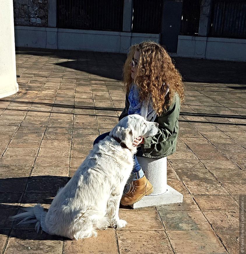 Девушка и ее собака, освещенные солнцем,  на башне Белланда