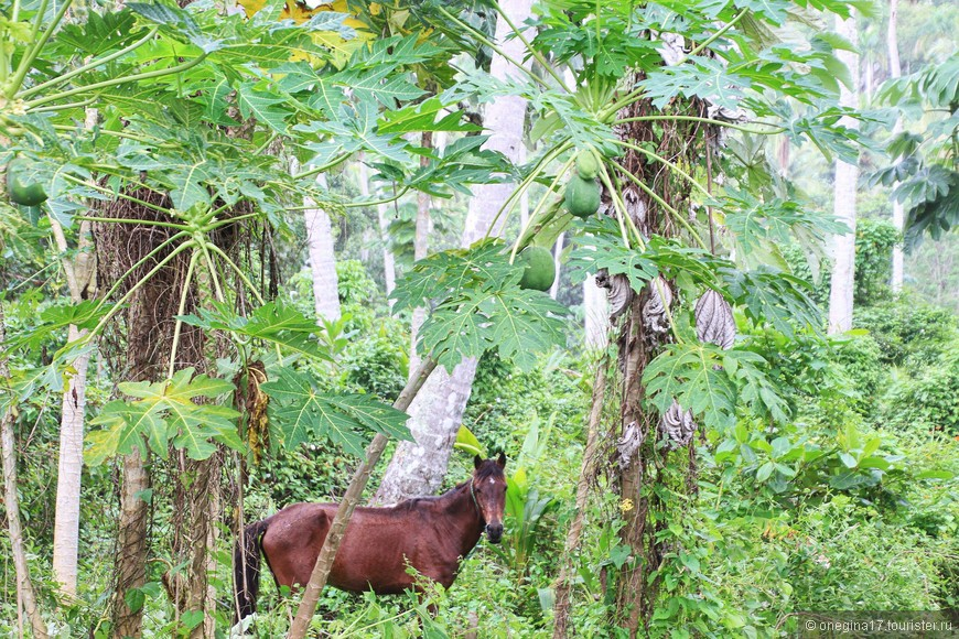Лошадь очень недовольно фырчала в нашу сторону, может жеребенок где был, я так и не нашла...