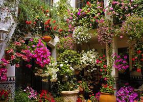 Дворики Кордобы. Буйство цветов и красок