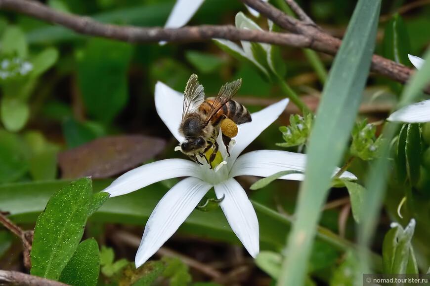 Пчелка с добычей...