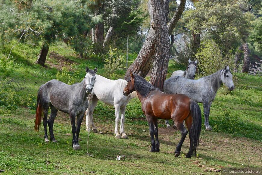 Тут пасутся лошадки - видимо, сегодня не их смена... Кстати, где-то прочел отзыв, там человек писал, что весь остров провонял лошадиным навозом. Неправда! Навозом там пахнет не сильнее, чем в любом другом месте, где есть лошади...)