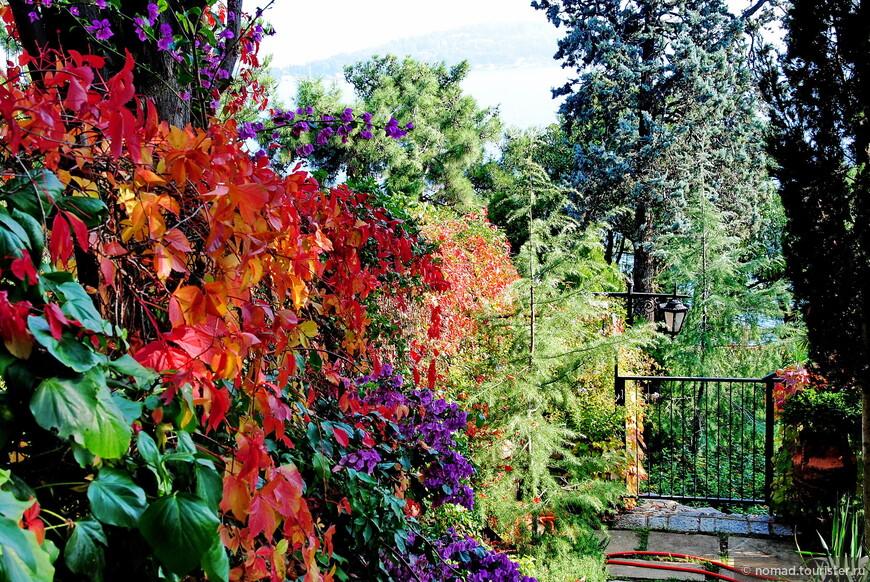 По осени изгороди расцвечены всеми цветами радуги....