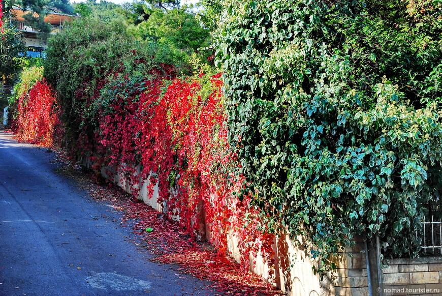 Прямо красная стена...)))