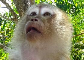 Пхукет. Вокруг обезьяньего холма