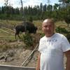 Бизоны в парке