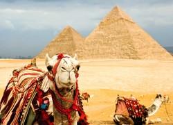 Египтяне пытаются привлечь россиян флешмобом