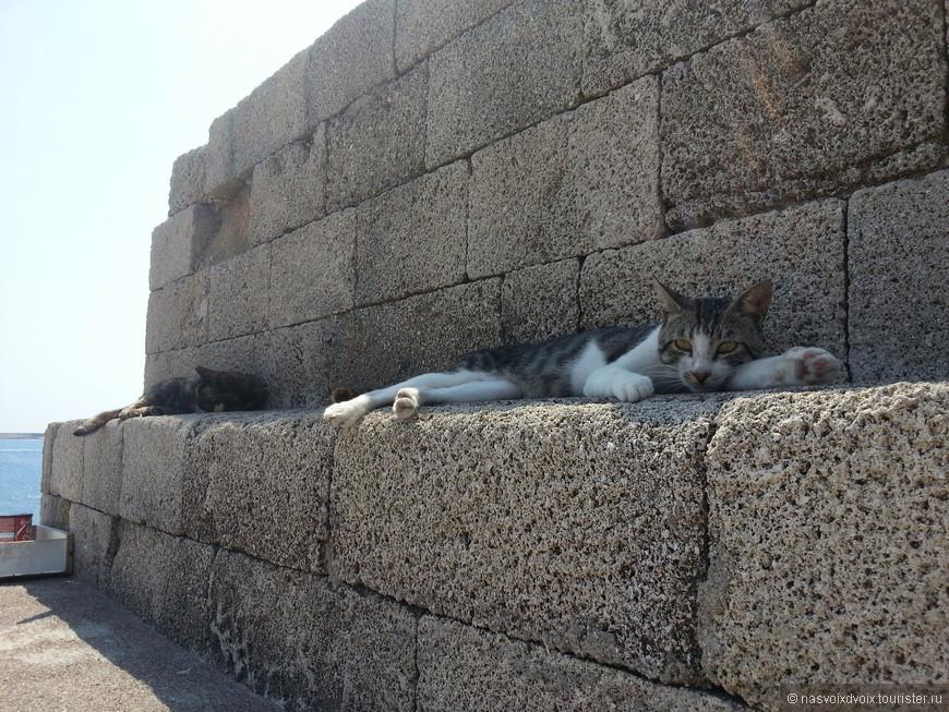 Милые кошки))