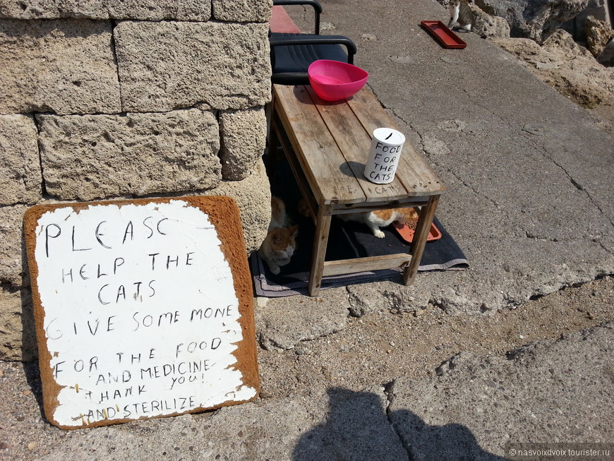 Можно помочь котам: покормить или дать денюжку
