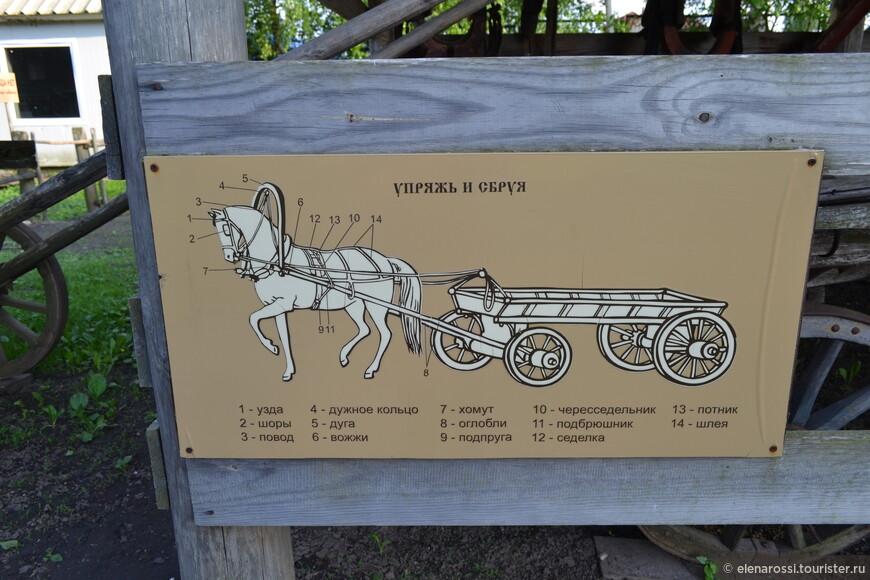 Очень полезное описание. а то ведь и не знаешь, с какой стороны подойти к лошадке... А лошадки по городу ходят.