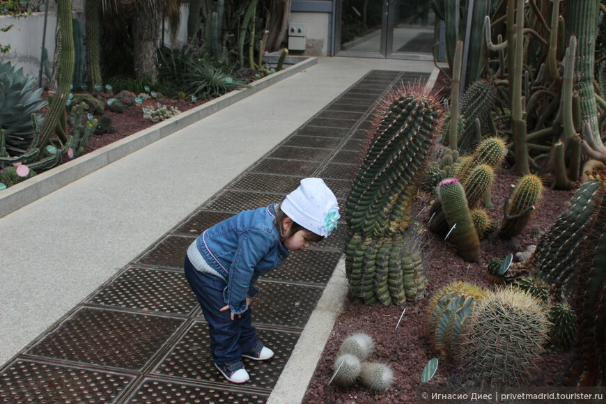 Оранжерея кактусов в королевском ботаническом саду Мадрида