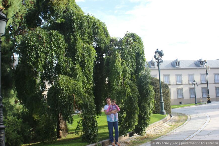 Очень красивые деревья в  Ла - Гранха