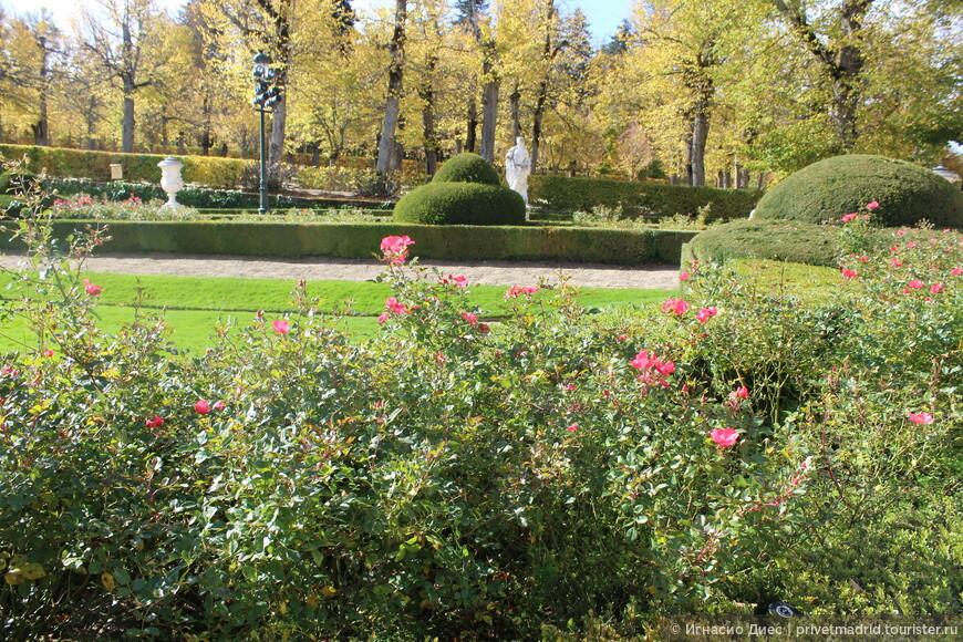 Розы в  королевском дворце Ла - Гранха