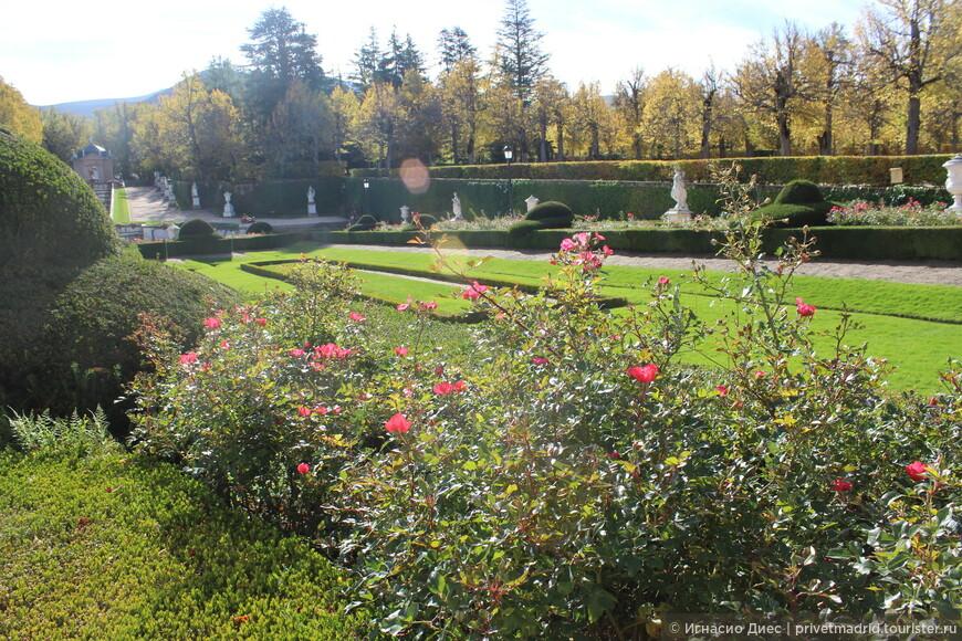 Розы в королевском дворце