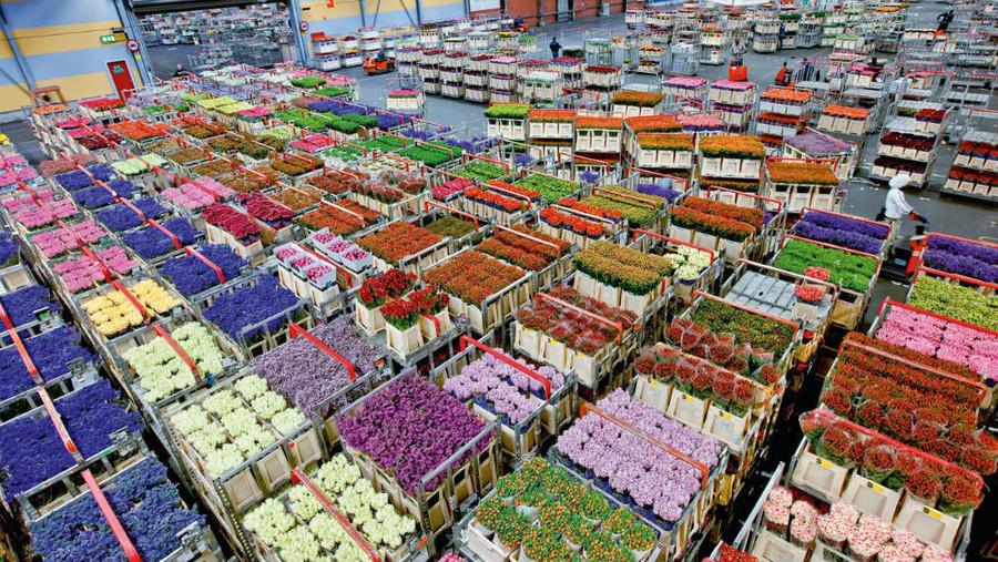 Оптовая база цветов в москве цены