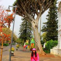 Когда я увидела драконовое дерево я была в шоке и они повсюду всех размеров.  Да возможно этим деревьям не несколько столетий или тысячелетий, но насмотреться можно вдоволь и БЕСПЛАТНО.