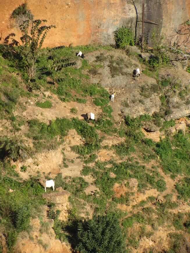 По одну сторону от моста, на склонах ущелья не хуже диких карабкались туда-сюда домашние козы...