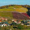Белое золото Европы - мейсенская фарфоровая мануфактура и крепость Альбрехтсбург. Вид на виноградники Мейсена.Экскурсии с частным индивидуальным гидом из Праги.
