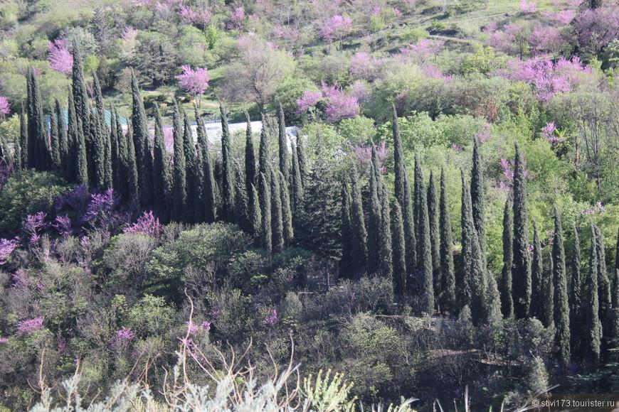 Вид от крепости Нарикала и матери Картли на Тбилисский Ботанический сад
