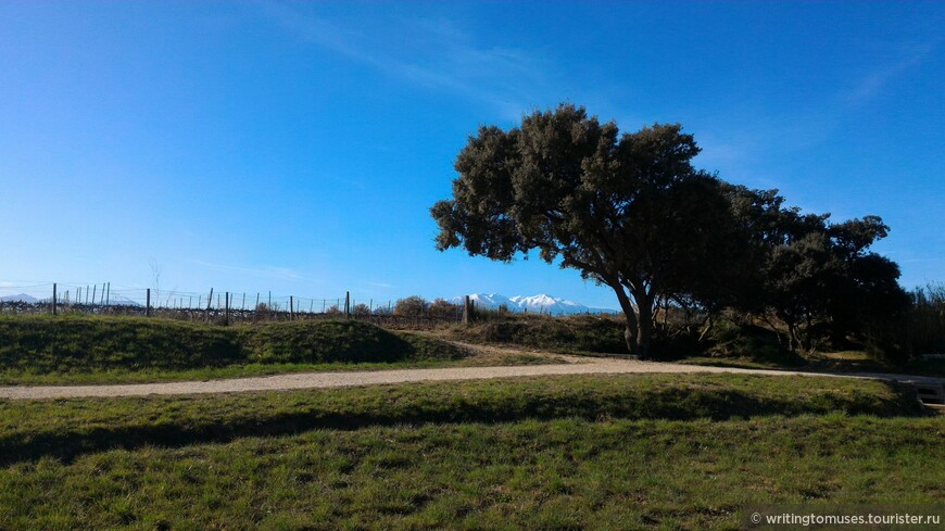 Пейзаж рядом с Перпиньяном на фоне священной горы Каталонии, Канигу.