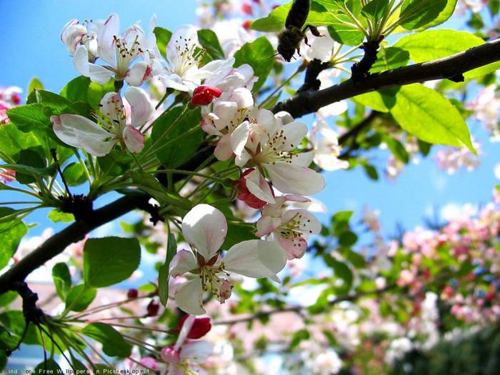 Открытки с яблоневым садом, марта немецкому