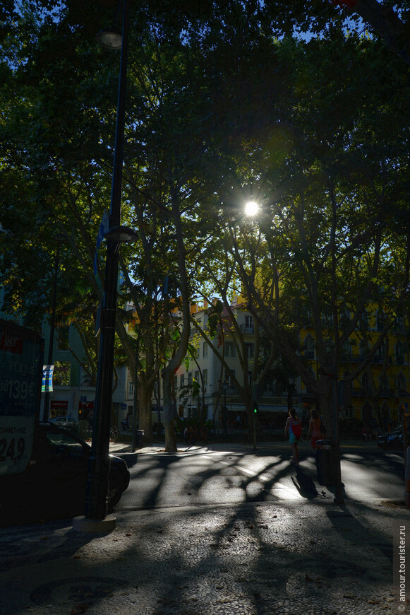 Солнце в платанах на Avenida da Liberdade.