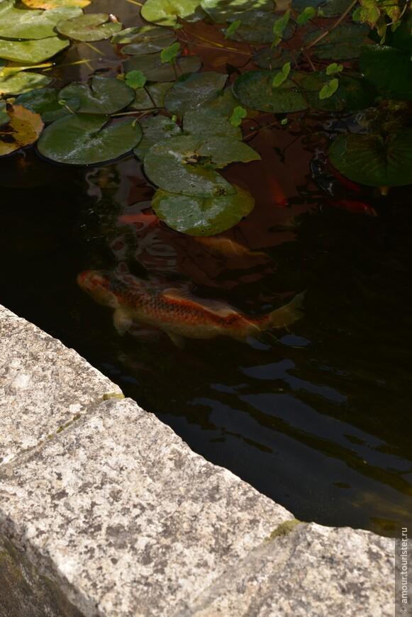 Перед входом в Quinta Das Murtas бассейн с золотыми рыбками.